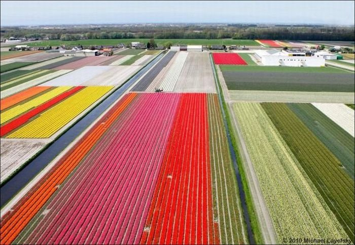 Tulip fields, Keukenhof, The Netherlands
