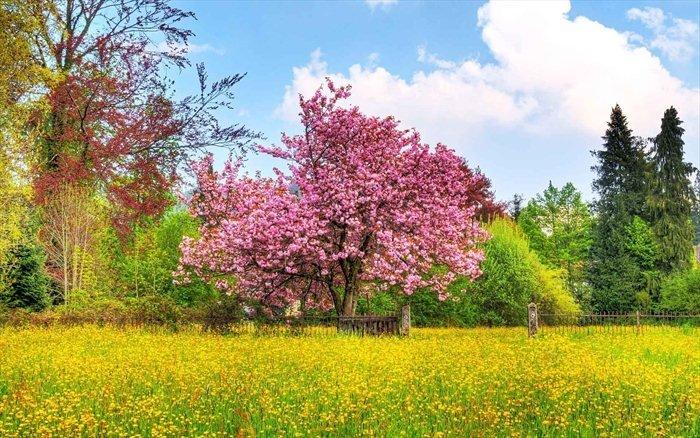обои для рабочего стола природа цветы № 509975 загрузить