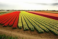 World & Travel: Tulip fields, Keukenhof, The Netherlands