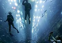 Trek.Today search results: Aquarium springs a leak in Dubai Mall, United Arab Emirates