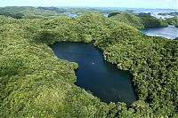 Trek.Today search results: Jellyfish Lake, Eil Malk island, Palau, Pacific Ocean