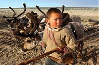 World & Travel: Life of Siberian reindeer herders, Yamal, Russia.
