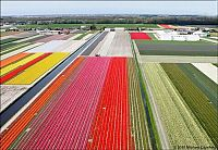 Trek.Today search results: Tulip fields, Keukenhof, The Netherlands