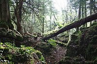 Trek.Today search results: Puzzlewood, Coleford in the Forest of Dean, Gloucestershire, England, United Kingdom