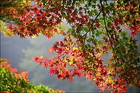 Trek.Today search results: autumn world