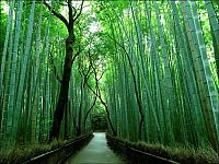 Trek.Today search results: Sagano bamboo forest, Arashiyama (嵐山, Storm Mountain), Kyoto, Japan