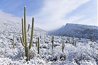 Trek.Today search results: Grand Canyon covered with snow, Arizona, United States