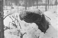 Trek.Today search results: History: World War II photography, Finnish Defense Forces, Finland