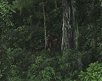 World & Travel: Lost uncontacted tribe, Alto Tarauacá, Acre state, Brazil