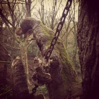 Trek.Today search results: Chained Oak, Alton village, Staffordshire, England, United Kingdom