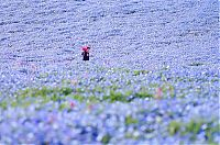 Trek.Today search results: Hitachi Seaside Park, Hitachinaka, Ibaraki, Japan