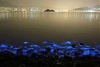 Bioluminescent phytoplankton, Hong Kong, China
