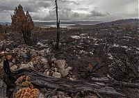 Trek.Today search results: Tasmania island fire, Commonwealth of Australia, South Pacific Ocean