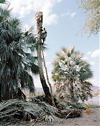 Trek.Today search results: Palm wine toddy collectors at work, Democratic Republic of the Congo, Africa