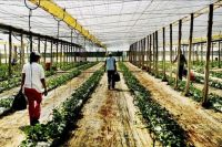 World & Travel: Greenhouse structures, Almería, Andalucía, Spain