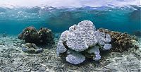 Trek.Today search results: Coral reefs, Okinawa Islands, Japan
