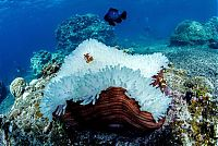 Coral reefs, Okinawa Islands, Japan